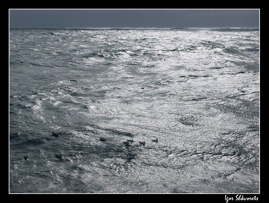 ocean22