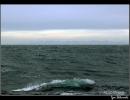 greenland-wave
