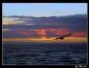 sunsetbird